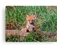 Who can resist this face - Ottawa, Ontario Metal Print