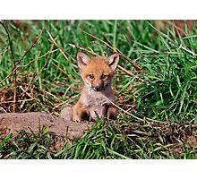 Who can resist this face - Ottawa, Ontario Photographic Print