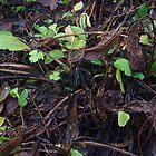 Comfrey Plants in Winter Mode by lezvee