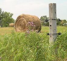 Fence Post  by Kathleen Brant