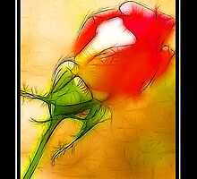 A Rose Is A Rose  by George  Link