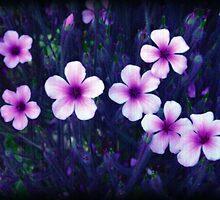 Plumeria Flowers by bchrisdesigns