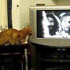 57 - WAITING FOR THE CAT FOOD COMMERCIAL (D.E. 2008) by BLYTHPHOTO