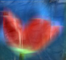 Tulip Abstract by Kimberly Palmer