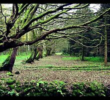 Woodburn Forest - Co. Antrim, NI by SNAPPYDAVE