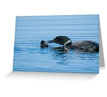 Loon feeding Baby - Mississippi Lake Greeting Card