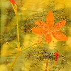 Orange Lily on Grunge by Rosalie Scanlon