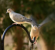 Two Doves by Holly Cawfield