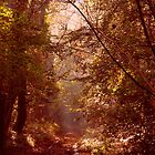 Morning woodland light. by james78
