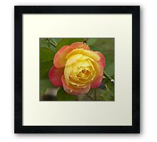 Scent Of A Rose Framed Print
