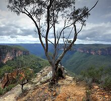 Gum tree at  Burramoki Headland overlooking Grose Valley Australia landscape by Leah-Anne Thompson