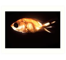 Glowfish Art Print
