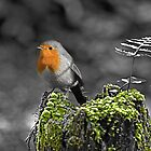 Robin by Mark Langworthy