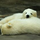 Realxing Polar Bear Cubs by P&T Photography
