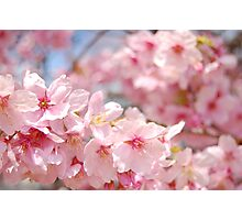 Pink glory Photographic Print