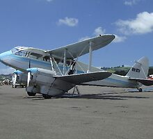 Majestic Dragon Rapide  by davidc