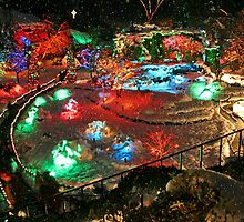 Christmas Lights in Butchart Gardens ..... by AnnDixon