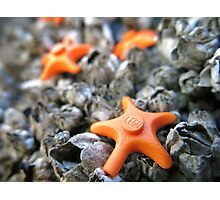 Seastars Photographic Print