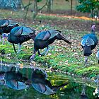 Wild Turkey Dinner Party by imagetj