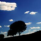 family of trees  by Vladan