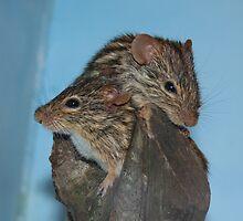 Twice as mice by Judd3rman