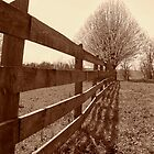 Fence & Tree by Kristie King