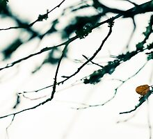 Last leaf by JH-Image