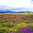 Purple Fields of Ireland by PPDesigns