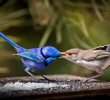 Fatherly Love by robcaddy