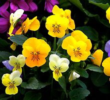 Pansies and Violets by blackjack