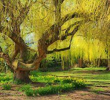 Spring in Batford by Roantrum