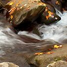Mountain Stream in the Fall by Danny Close