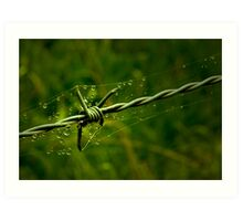 Beauty and the Barbed Wire Art Print