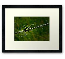 Beauty and the Barbed Wire Framed Print
