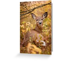White Tail Deer Relaxing Greeting Card