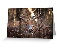 White Tailed Deer Buck In Woods Greeting Card