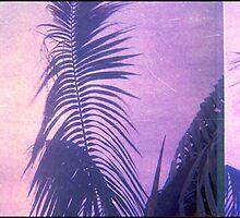 palmy balmy by Juilee  Pryor