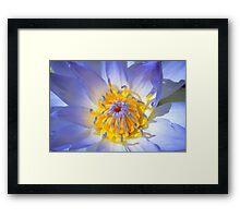 Blue Water Lily - Sydney Royal Botanic Gardens, NSW Framed Print