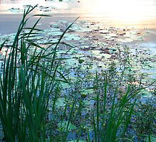 Blue Pond at Sunset by Kathie Nichols