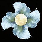 Moon Flower by Cassie Robinson