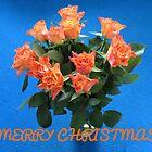 Orange Roses Christmas Card by SunriseRose
