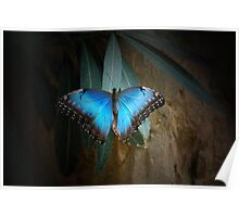 Blue Painted Lady Poster