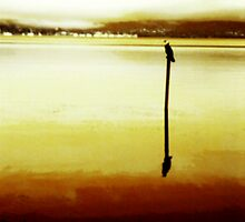 Bird On A Mooring by reflector