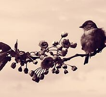 Flowered Finch by solnoirstudios