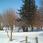 More Winter Trees and Shrubs at the Iowa Farm - Feb. 2008 by Christopher Johnson