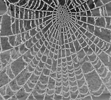 frosty web by Leanne Jones