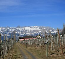 Alpine Wine by BigAl1