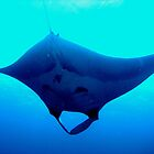 Manta Love! by sailgirl