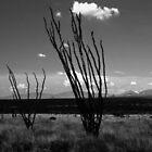 Arizona Desert by Harlan Mayor