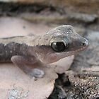 Stone Gecko by Dave Fleming